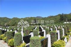 凤凰山陵园墓区环境