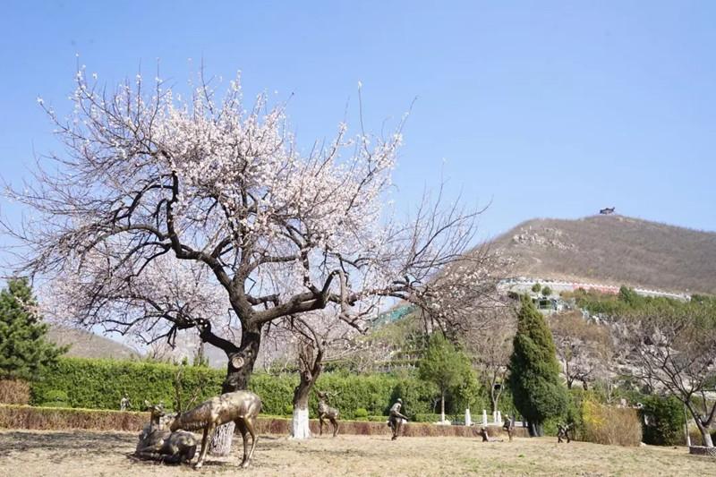 桃峰园生态安葬