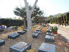 天寿陵园树葬墓地双穴