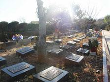 天寿陵园树葬墓地