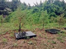 灵山宝塔陵园树葬墓地