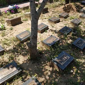 天寿陵园树葬公墓