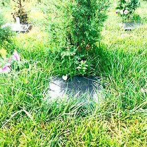 树葬公墓展示