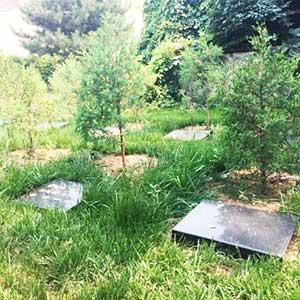 树葬墓地实拍