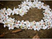 殡葬行业:这份神秘职业带给了我一些来自生命底层的触动