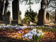 殡葬改革目前存在的问题与建议