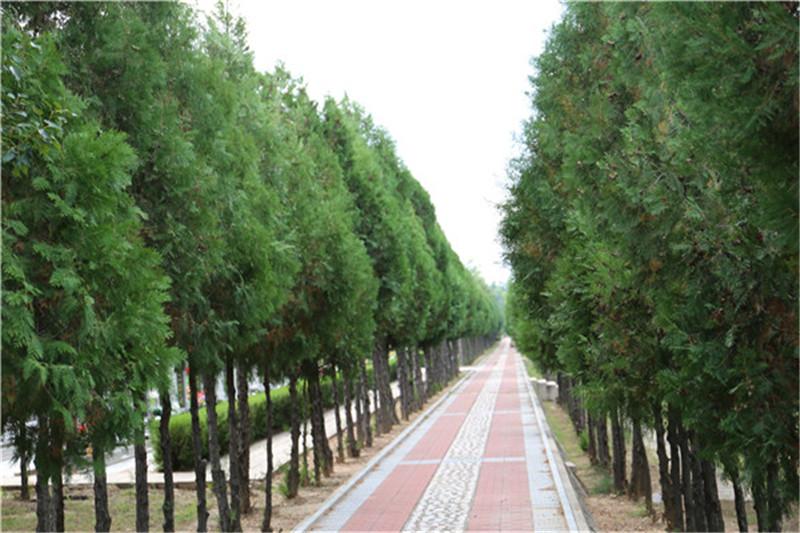 中华永久陵园道路景观