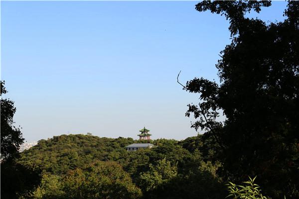 远眺金山陵园小塔