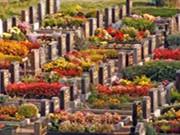 仿佛森林公园一般幽美、静谧、安宁的德国墓园