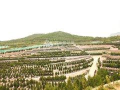 北京昌平龙泉公墓位置介绍