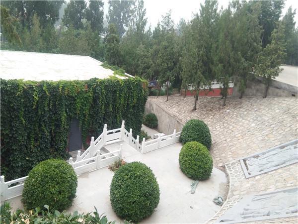 九里山公墓二区内景实拍