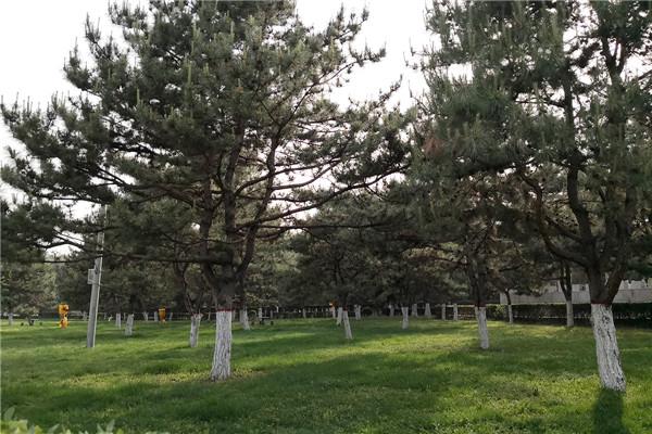 世界华侨陵园景色