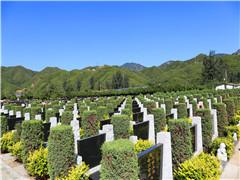 清明节期间北京民政局工作人员到潮白陵园调研