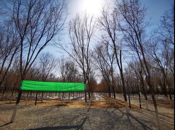 率先启动散坟治理 推进绿色殡葬环境