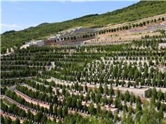 墓地在山顶上好不好?周围有其他山环绕怎么说?