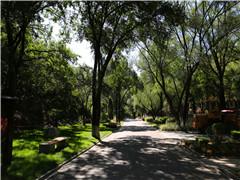 2021北京树葬价格都是多少?有几个树葬陵园呢?